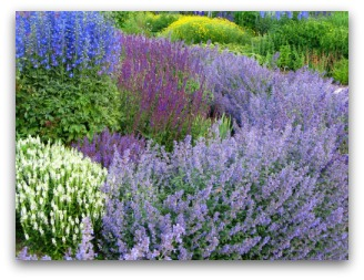 Ornamental Herb Border