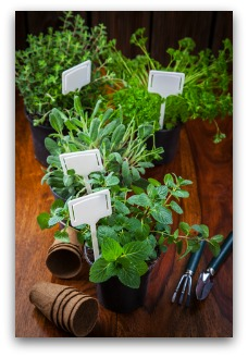 Tips for growing herbs indoors or outdoors workwithnaturefo