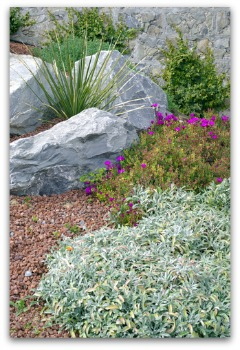 growing herbs in a beautiful rock garden