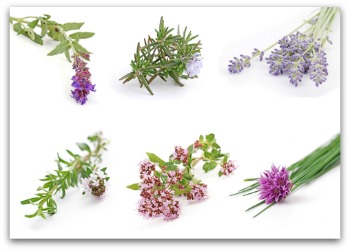 herb blossom examples