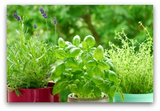 potted outdoor herb garden