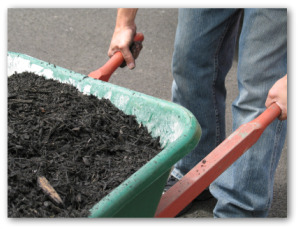 gardener pushing a wheel barrow of mulch