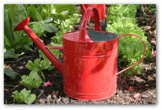 vegetable garden with red watering can