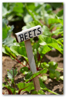 beet sign and plants