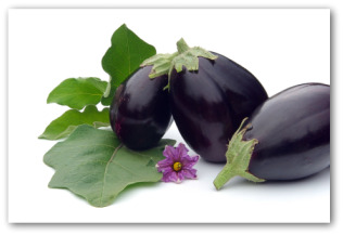 fresh eggplants and leaves