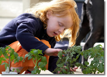 young girl examining tomato plants