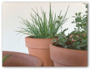 Indoor gardening tips for Indoor vegetable gardening tips