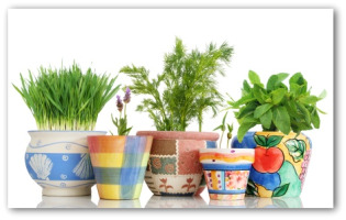 Indoor Vegetable Gardening Indoor Gardening Tips Indoor
