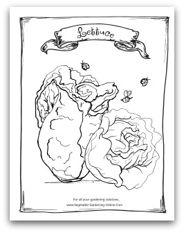 printable lettuce coloring page - Coloring Packets