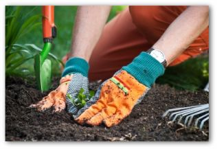 Gardener Patting The Soil Around A Plant That They Just Planted Planting A  Garden