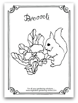 Broccoli Coloring Page Printable