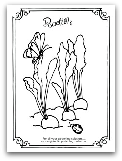 radish coloring page printable - Garden Coloring Pages