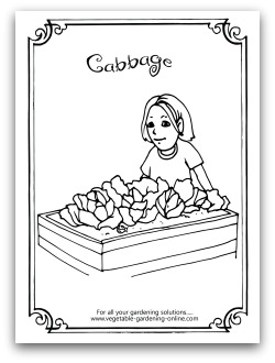 free cauliflower coloring page printable - Garden Coloring Pages