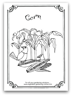 Garden Corn Coloring Page Printable