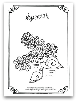 Spinach Coloring Page Printable