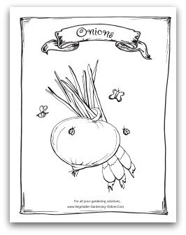 Printable Onion Coloring Page