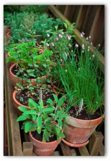 pots with herbs planted in a patio vegetable garden - Small Patio Vegetable Garden Ideas