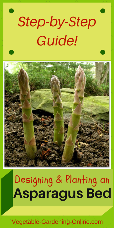 easy steps for making an asparagus bed