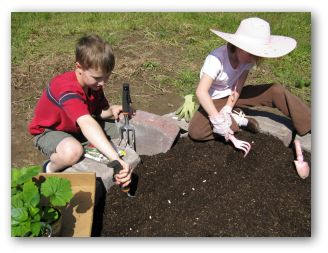 planting green bean seeds in the vegetable garden