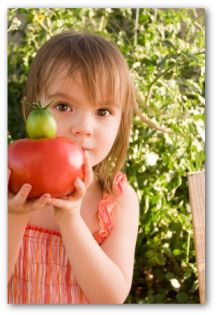 little girl holding tomatoes from the garden