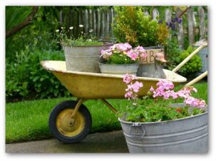 Potted Container Garden On The Move In A Wheel Barrow