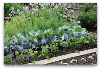 Backyard Row Garden Example Row Vegetable Garden Example
