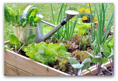 small vegetable garden example