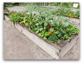 Small Vegetable Gardening With Raised Beds