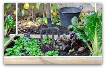 Simple Wood-Frame Raised Bed Vegetable Garden