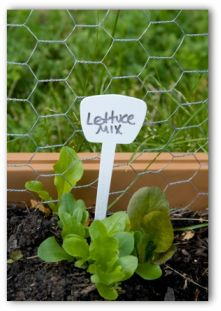 lettuce mix plants under a garden sign in a raised vegetable garden bed