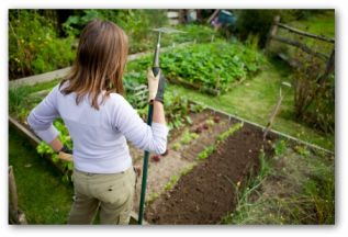 gardener looking at a raised bed vegetable garden
