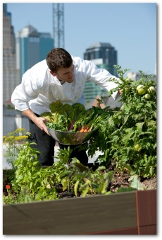 vegetable garden on rooftop