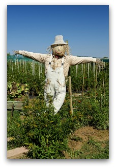 vegetable garden scarecrow idea
