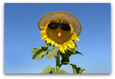 sunflower scarecrow idea