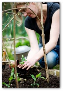 gardener planting a plant in a container garden