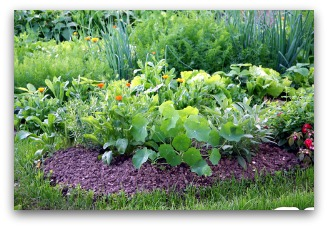 small vegetable gardens can be created in an existing flower bed or border - Gardening Design Ideas