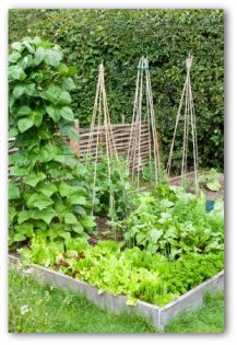small raised bed vegetable garden