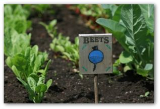 beet plants under a sign