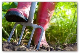 spring vegetable garden tips gardener stepping on a pitch fork in a garden
