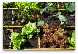 square foot garden image