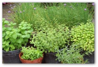 herb container garden outside