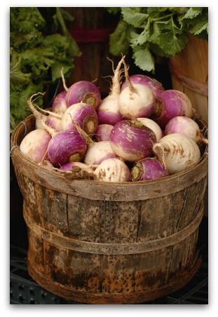 basket of freshly harvested turnips