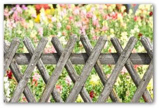 recycled wood lattice vegetable garden fencing