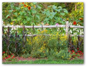 vegetable garden fencing using poles