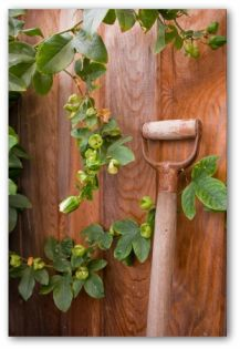 solid wood vegetable garden fencing