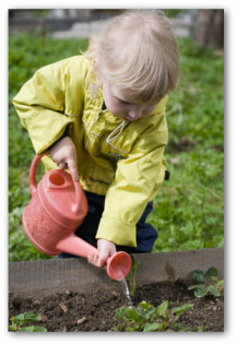 young gardener watering a raised bed vegetable garden