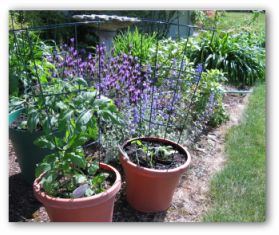container or potted vegetable garden layouts - Flower And Vegetable Garden Ideas