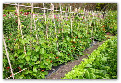Vegetable Garden Design Ideas Home Design Ideas