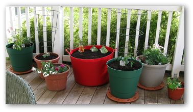 container garden growing on a porch