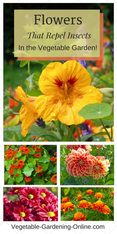 flowers can provide organic pest control to vegetable garden